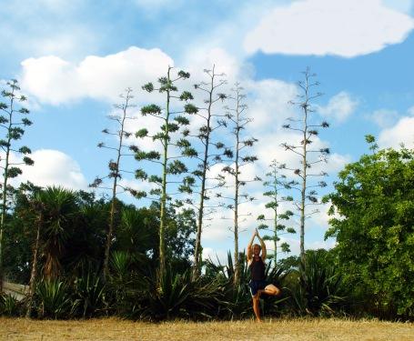 וריקשאסנה - תנוחת העץ